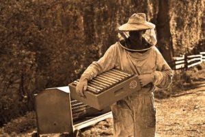 medpčelarskimagazin-HONEYBEEKEEPINGMAGAZINE -Intervju-Reportaza