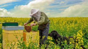 medpcelarskimagazin/honeybeekeeping magazine-pčelarenje